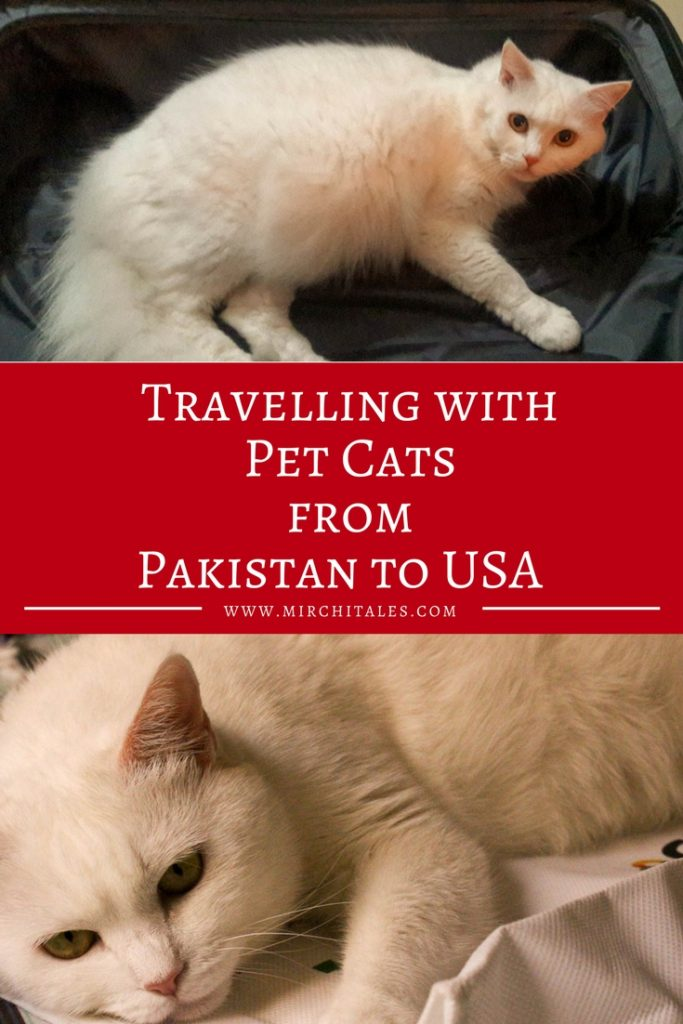 Travelling with pet cats from Pakistan to USA   MirchiTales